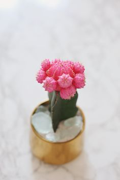 [br] I grew up in a home that had plants in every corner, flowers in the front yard and a. Succulent Gardening, Planting Succulents, Planting Flowers, Air Plants, Cactus Plants, Grafted Cactus, Air Plant Terrarium, Pink Moon, Succulents In Containers