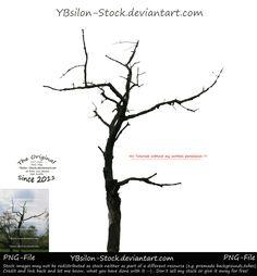 Naked tree by YBsilon-Stock by YBsilon-Stock