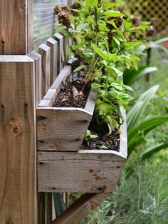 Tiered strawberry boxes with herbs