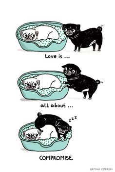 A Pug's Guide to love …