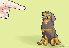 Rottweiler Training - How To Train Your Rottie | RottweilerHQ.com