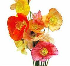 "The Orange Poppy is pretty close to ""Tangarine Tango"" in it's color!"