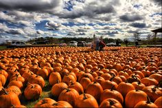Hall's Pumpkin Farm in Grapevine. You can actually cut the pumpkin from the vine yourself! Corn Maze& Hay Rides :)