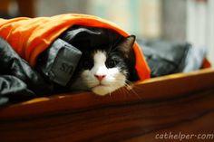 Hiding in plain sight!