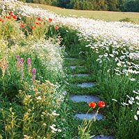 walkway in wildflower meadow #gardening