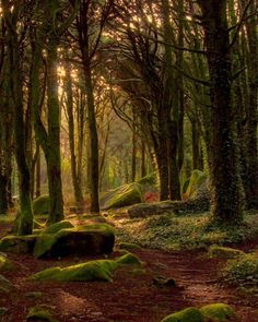 way - No way -No way - No way - 12 Astonishing Places From All Over The World - Forest Path, The Netherlands Autumn Images Forest Path, Tree Forest, Forest Trail, Forest Floor, Dark Forest, Forest Sunset, Night Forest, Magic Forest, Woodland Forest