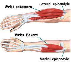 forearm exercises for mass