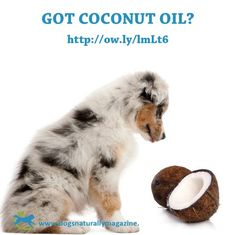 Coconut Oil Dog Paw Pads