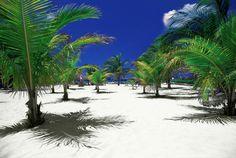 White sandy beach in Cozumel, Mexico