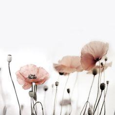 Cute Wallpaper Backgrounds, Pink Wallpaper, Flower Wallpaper, Beautiful Nature Wallpaper, Beautiful Flowers, Botanical Illustration, Illustration Art, Adidas Iphone Wallpaper, Spring Aesthetic