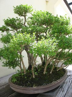 in the Bonsai Garden | Flickr - Photo Sharing!