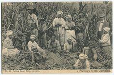 Old Jamaica postcard (Circa 1910) ( via )
