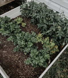 Garden Compost, Gardening, Composting, Plants, Instagram, Lawn And Garden, Plant, Planets, Horticulture