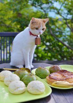 おいしいパン屋さんに来たにょだ♪ どれにしようかにゃ〜?