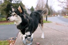 Pets lives are being changed with some smart use of 3D-printed prosthetic limbs