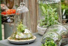 Terrain Under Glass: Creating a Specimen Cloche Water Plants Indoor, Cloche Decor, Inside Plants, Succulent Terrarium, Terrarium Ideas, Houseplants, Outdoor Gardens, Planting Flowers, Orchids