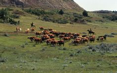 go on a cattle drive Real Country Girls, Somewhere Only We Know, Cattle Drive, Salt Of The Earth, Cowboy Up, Close To My Heart, Farming, Ranch, Bucket