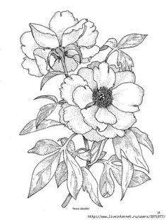 Designs:Floral: for fabric painting by Indus Ladies Flower Coloring Pages, Coloring Book Pages, Fabric Painting, Painting & Drawing, Peony Drawing, Flower Sketches, Painting Patterns, Flower Art, Peony Flower