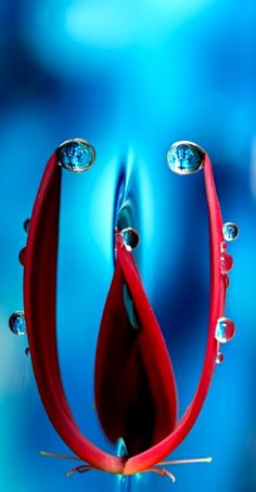 Red and Blue, Water Drops, Macro Micro Photography, Close Up Photography, Water Photography, Dew Drops, Rain Drops, Gota A Gota, Photo Macro, Drip Drop, Fotografia Macro