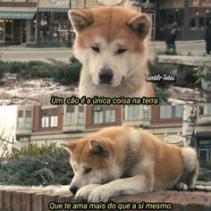 Funny Animal Quotes, Cute Quotes, Girl Quotes, Funny Animals, Cute Animals, Girl And Dog, Sad Girl, Movie Quotes, Funny Cute