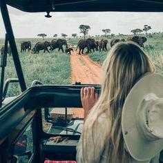 Safari drive via @hilvees