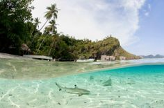 Juvenile Blacktip Reef Sharks Feed in Shallow Waters as Resort Life Goes on Above, Raja Ampat, Indonesia Andy Lerner