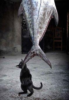 15-voleurs-de-chats-pris-la-patte-dans-le-sac-12