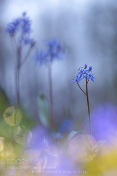 blue magic by p_petzl. @go4fotos
