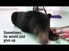 You Won't Believe How Much Trouble This Bear Went Through Just So He Could Climb Trees! | The Animal Rescue Site Blog