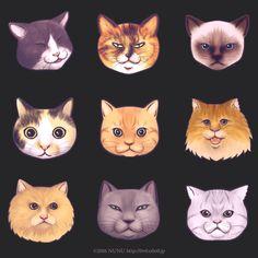 うちの近所の猫たち