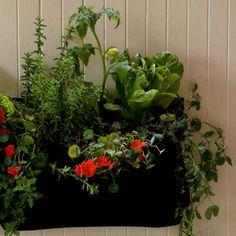 Wally One Indoor Planter $39