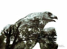 Povestea unui vultur care se credea găină | PictoLandia Lion Sculpture, Statue, Art, Kunst, Sculpture, Art Education, Artworks