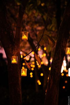 """autumnalife: """"There's something special about fairy lights in the fall 🍁✨🍁✨🍁 """" Lit Wallpaper, Nature Wallpaper, Iphone Wallpaper, Creative Photography, Nature Photography, Halloween Photography, Amoled Wallpapers, O Gas, Autumn Lights"""