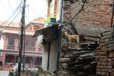 Nepal Earthquake Relief: Restore Nepal
