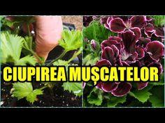 The Creator, Face, Tudor, Garden Ideas, Youtube, Gardening, Cooking, Desserts, Agriculture