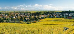 The Winestreet and the Palatinate- Vacation Region Deidesheim