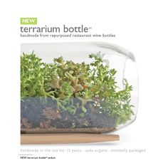 Potting Shed Creations - terrarium bottle- handmade from repurposed restaurant wine bottles