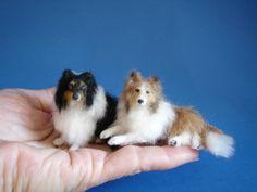 miniatur, ag mini, pet, dog
