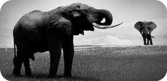 meaningful elephant tattoo ideas