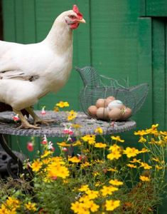 hen and eggs...