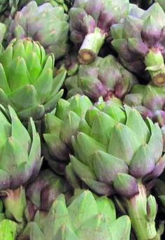 Native to the Mediterranean, growing artichokes (Cynara scolymus) requires cool nights and warm days. Aside from providing delicious, tender thistles for the table, the plants themselves are gorgeous! Love Garden, Dream Garden, Permaculture, Growing Artichokes, Globe Flower, Organic Gardening, Vegetable Gardening, Gardening Tips, Edible Garden