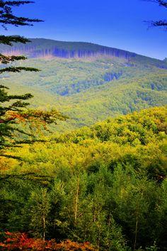 Srdce lesa