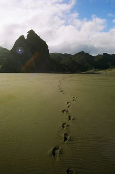 KareKare Beach, New Zealand by schorlemädchen, via Flickr