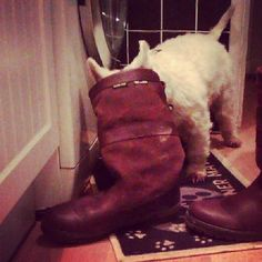 No biscuits in there i'm afraid. Only Gore-Tex lining! #wheredoyougoinyours #DogsLoveDubarry
