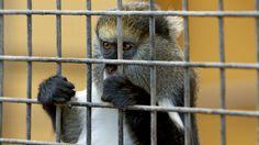 L'université de Brive crée un diplôme en droit animalier, 20ans après les Etats-Unis, il était tant...