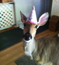 This is Lily the Deer! She's actually famous!