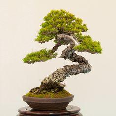Red Pine, BIB 14th Annual Exhibit - Dupuich's Photos