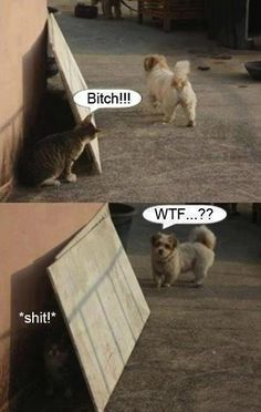 hahaha I don't know why I laughed as hard as I did....but it's funny(: