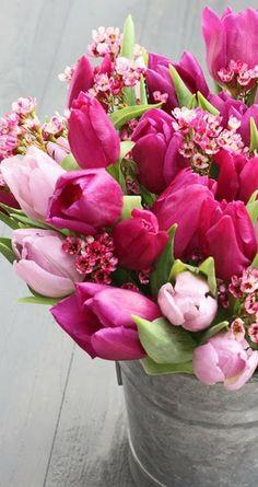 Tulips ❤