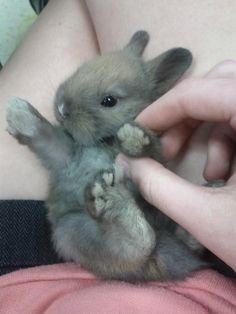 Adorable bunny!